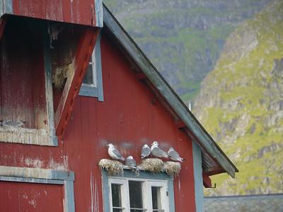 Velotour Lofoten-Vesterålen-Narvik  / @RobAng 2012  / Å i Lofoten, Sørvågen, Nordland, Lofoten, NOR, Norwegen, 0 m ü/M, 09/09/2012 10:18:44