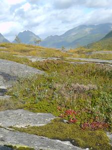auf der Küstenstrasse von Mo I Rana nach Bodø / @RobAng 2012 / Selnes, Stokkvågen, Nordland, NOR, Norwegen, 200 m ü/M, 06.09.2012 15:13:38