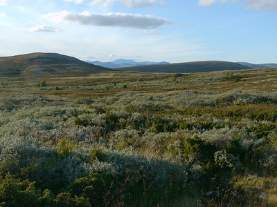 @RobAng 2012 / Odlo, Friies-Weg von Ringebu nach Atna, Oppland, NOR, Norwegen, 1080 m ü/M, 03.09.2012 18:40:26