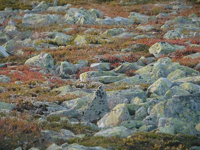 @RobAng 2012 / Brettninga, Friies-Weg von Ringebu nach Atna, Oppland, NOR, Norwegen, 1187 m ü/M, 03.09.2012 19:07:39