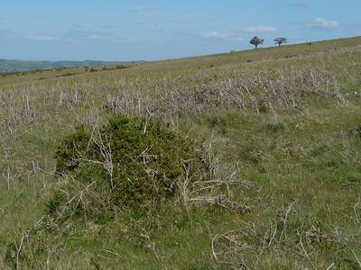 © RobAng 2011, Velotour GB (Dorset-Devon-Cornwall), Devon, North Bovey, North Bovey, 393 m