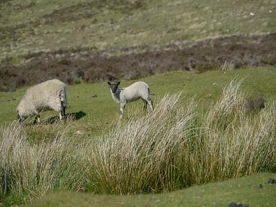 © RobAng 2011, Velotour GB (Dorset-Devon-Cornwall), Devon, Postbridge, Chagford, 451 m