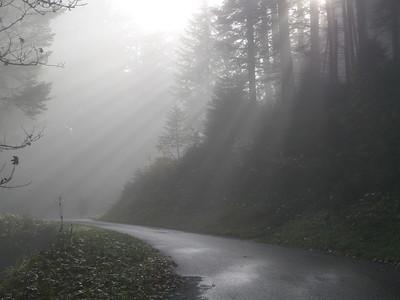 @RobAng 2012 / Aufstieg zum Rinderweidhorn, südöstl. von Pfäffikon (SZ), Kanton Schwyz, CH, Schweiz/Switzerland,  25.10.2012 10:44:12