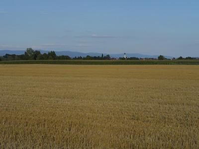 @RobAng, Aug 2013 / Pittrich, Kirchroth, Bayern, DEU, Deutschland, 317 m ü/M, 15.08.2013 18:26:54