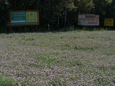 @RobAng, Aug 2013 / Veselícko, Veselícko, Ždár nad Sázavou, CZE, Tschechien, 661.575 m ü/M, 07.08.2013 12:32:32