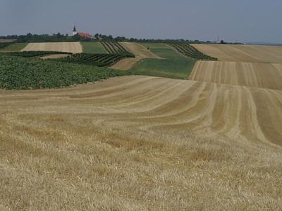 @Copyright: RobAng, Aug 2013 / Wutzelburg, Stillfried, Niederösterreich, AUT, Österreich, 190.872 m ü/M, 04/08/2013 13:34:13