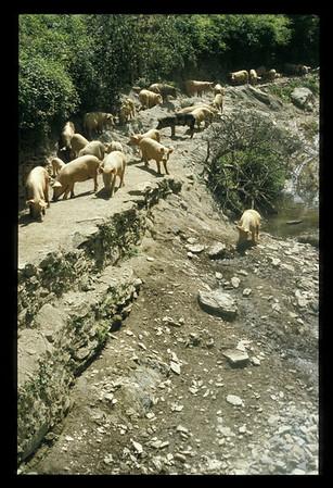 @RobAng, Juni 2002  - C Korsika per Velo