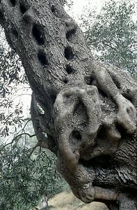 @RobAng 2003, Nord-Griechenland per Velo: Igoumentisa-Plataria-Sivota-Aghia-Parga(Valtos)