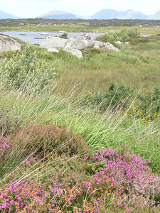 2004/08/07 12:26:36 /  ©RobAng /  Ireland - Irland / Co. Galway / Region Connemara