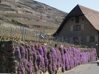 Ostern 09 - per Velo rund um den Genfersee und via Bonneville nach Annecy / Aufnahmeort  Grandvaux (394.2 m), La Conversion, Schweiz /  ©  Rob Tani