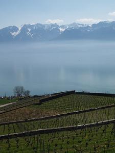 Ostern 09 - per Velo rund um den Genfersee und via Bonneville nach Annecy / Aufnahmeort  Saint-Saphorin (Lavaux) (508.9 m), St-Saphorin (Lavaux), Schweiz /  ©  Rob Tani