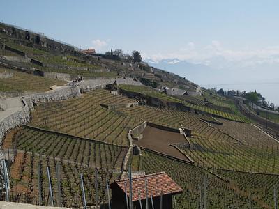 Ostern 09 - per Velo rund um den Genfersee und via Bonneville nach Annecy / Aufnahmeort  Grandvaux (421.7 m), Cully, Schweiz /  ©  Rob Tani