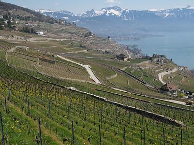 Ostern 09 - per Velo rund um den Genfersee und via Bonneville nach Annecy / Aufnahmeort  Saint-Saphorin (Lavaux) (509 m), St-Saphorin (Lavaux), Schweiz /  ©  Rob Tani