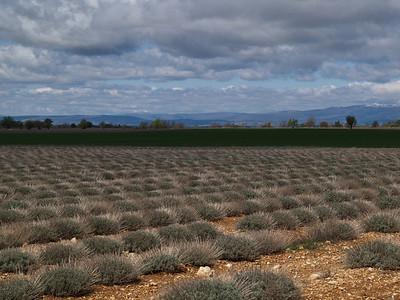 bei Puimoisson, Provence (France), April 08
