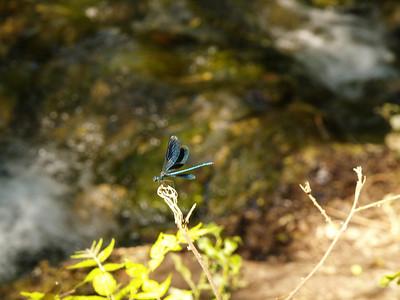2006/07/09 11:28:31 /  ©RobAng /  Croatia - Kroatien / Krka National Park