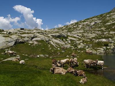 2006/07/15 13:45:30 /  ©RobAng /  Schweiz / Gotthard Pass