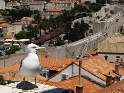 2006/07/05 12:12:13 /  ©RobAng /  Croatia - Kroatien / Dubrovnik