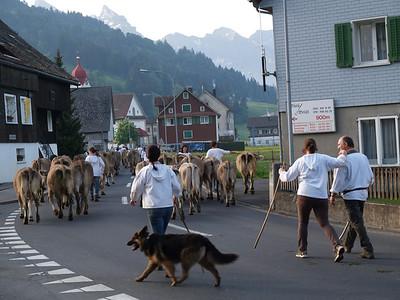 ©RobAng 2009/05/23 07:11:04, Euthal, 894 m // Velotour  Auffahrt 09 - Türlersee-Aegerisee-Raten-Sihlsee-Sattelegg-Wäggitalersee