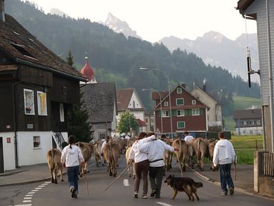 ©RobAng 2009/05/23 07:11:09, Euthal, 894 m // Velotour  Auffahrt 09 - Türlersee-Aegerisee-Raten-Sihlsee-Sattelegg-Wäggitalersee