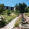 Oakland Rose Garden in Bloom