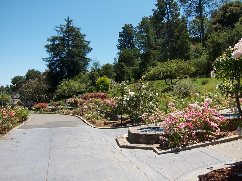 Oakland Roses in Bloom<br /> Oakland Rose Garden 2012-06-08 at 14-03-47