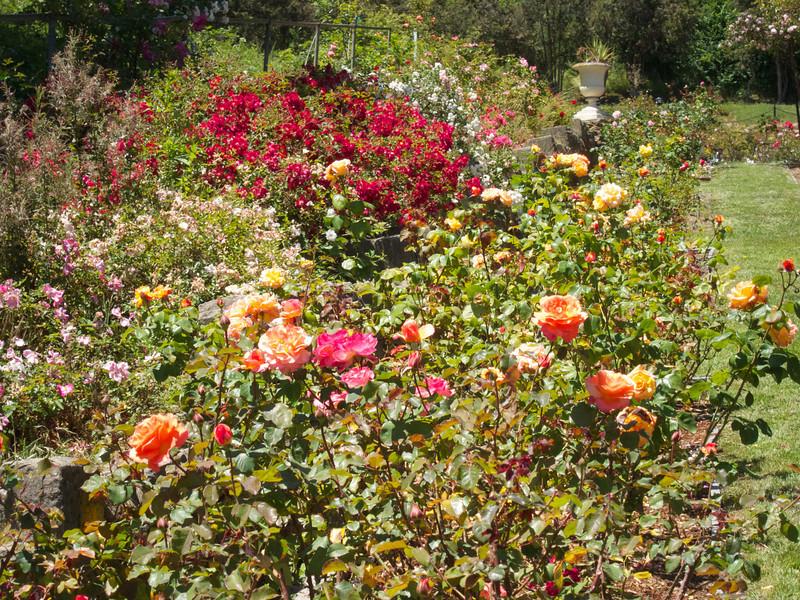 Oakland Roses in Bloom<br /> Oakland Rose Garden 2012-06-08 at 14-02-11