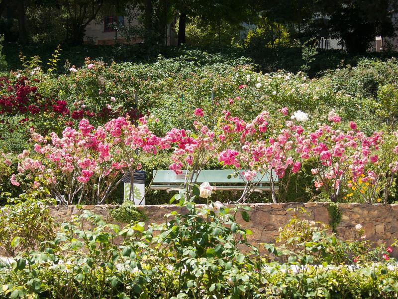 Oakland Roses in Bloom<br /> Oakland Rose Garden 2012-06-08 at 14-07-39