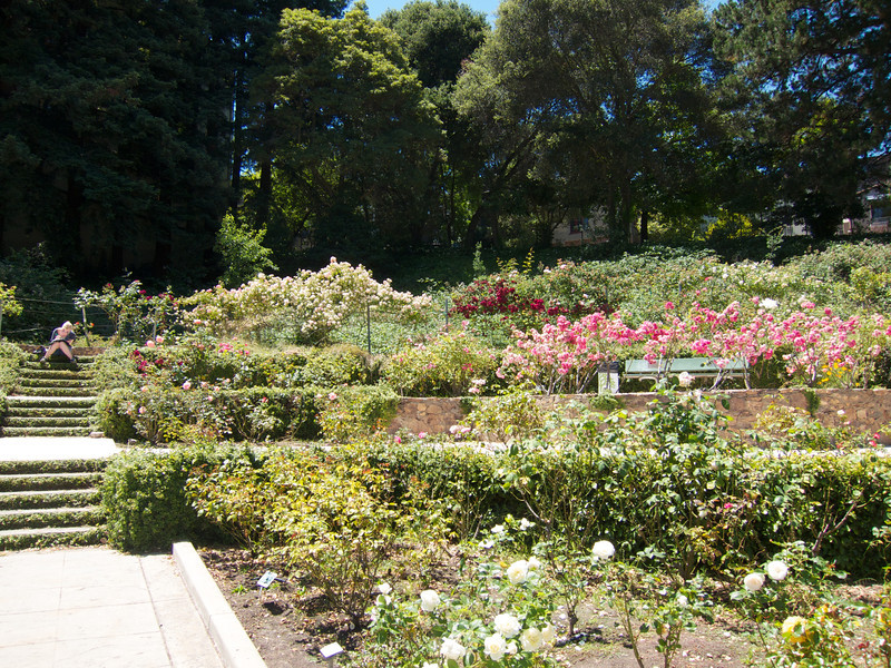 Oakland Roses in Bloom<br /> Oakland Rose Garden 2012-06-08 at 14-07-19