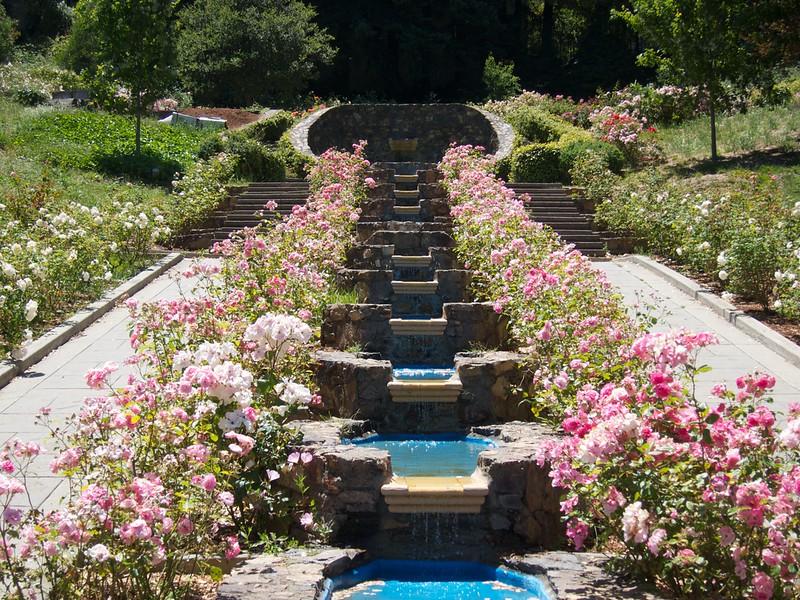 Oakland Roses in Bloom<br /> Oakland Rose Garden 2012-06-08 at 14-00-45