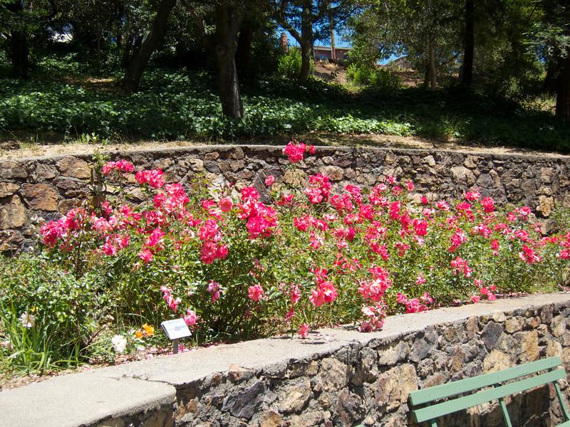Oakland Roses in Bloom<br /> Oakland Rose Garden 2012-06-08 at 14-02-38