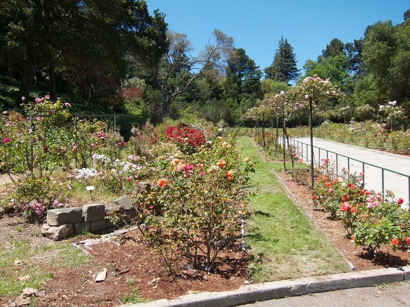Oakland Roses in Bloom<br /> Oakland Rose Garden 2012-06-08 at 14-01-58