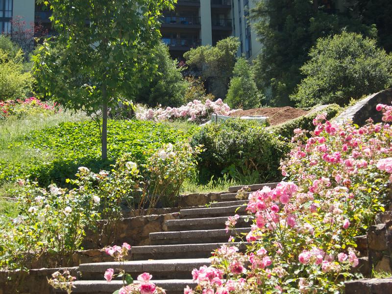 Oakland Roses in Bloom<br /> Oakland Rose Garden 2012-06-08 at 14-04-52