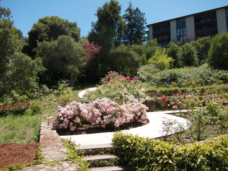 Oakland Roses in Bloom<br /> Oakland Rose Garden 2012-06-08 at 14-06-26