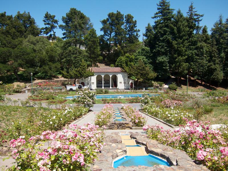 Oakland Roses in Bloom<br /> Oakland Rose Garden 2012-06-08 at 14-05-29