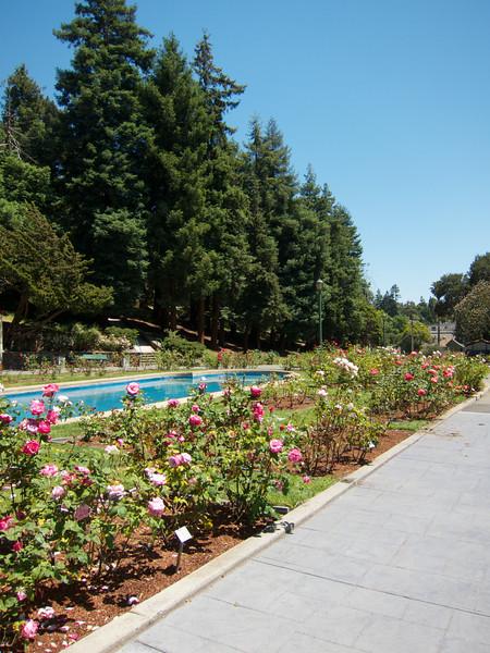 Oakland Roses in Bloom<br /> Oakland Rose Garden 2012-06-08 at 14-03-38