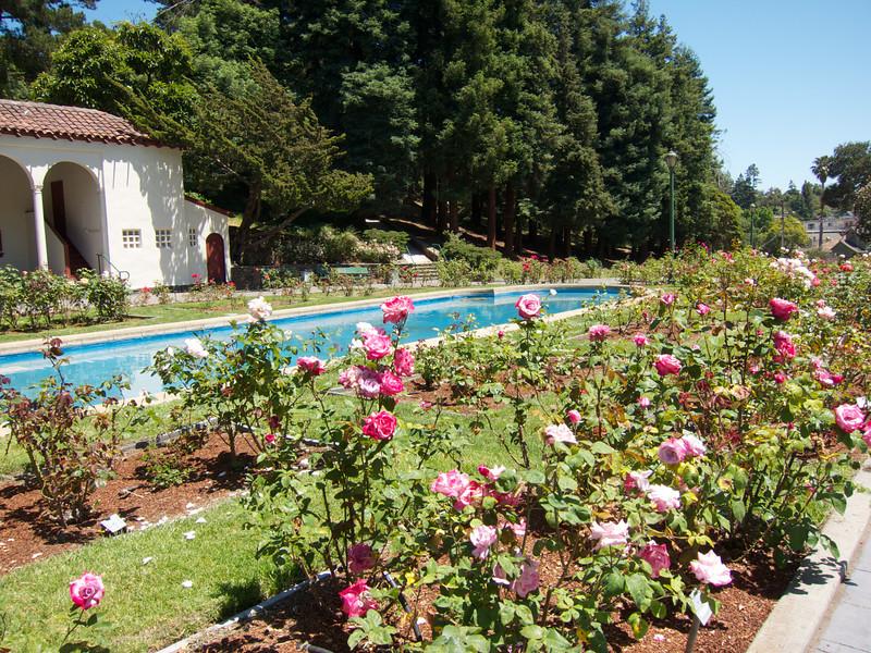 Oakland Roses in Bloom<br /> Oakland Rose Garden 2012-06-08 at 14-01-36