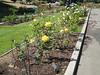 Oakland Rose Garden 2013-05-10 at 14-33-29