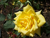 Oakland Rose Garden 2013-05-10 at 14-33-50