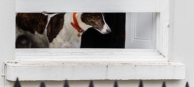 Doggie in the Window 2