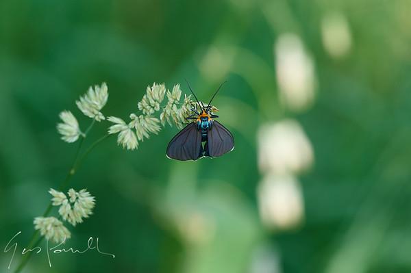 Blue and orange bug