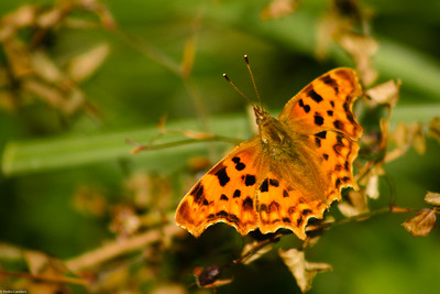 Comma - Whitecross Green