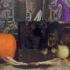 """© Carol-Ann Photography<br /> <a href=""""http://www.facebook.com/CarolAnnPhotography"""">http://www.facebook.com/CarolAnnPhotography</a><br /> <a href=""""http://www.carol-annphotography.com/blog"""">http://www.carol-annphotography.com/blog</a>"""