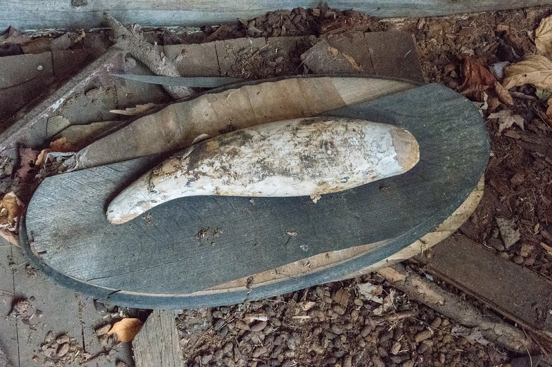 What was likely a wall-mounted taxidermy fish, now on the ground, only wood left.