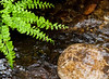 The Fern and the Rock...  A point of perspective, Fern Canyon...