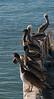 Pelican's Roost