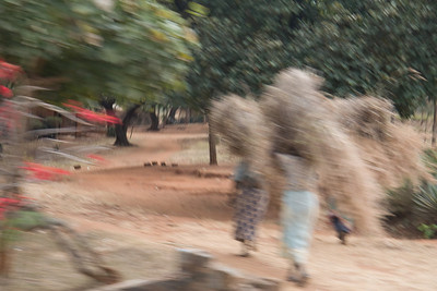 Carrying straw possibly for roof repair or to market to sell or barter.