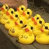 The winning ducks