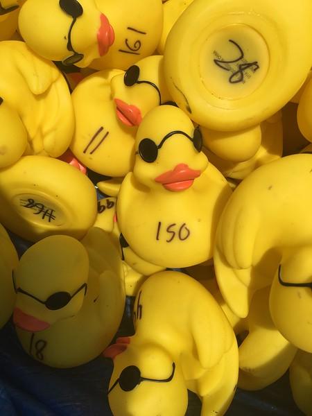 ducks among us