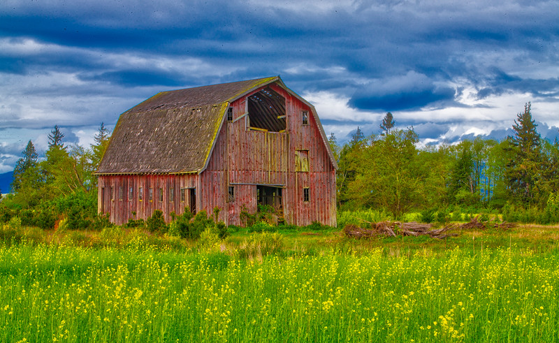 Red Barn and Mustard