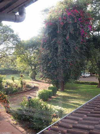 Diane's Kenya Photos